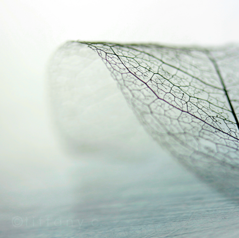Translucent leaf skeleton - essential